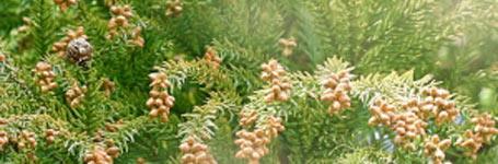 花粉症対策にサンルーム