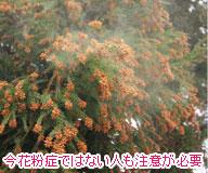 花粉の季節の洗濯物問題をサンルームで解決